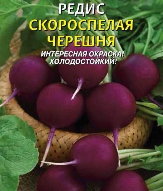 Фиолетовый редис Скороспелая черешня фото