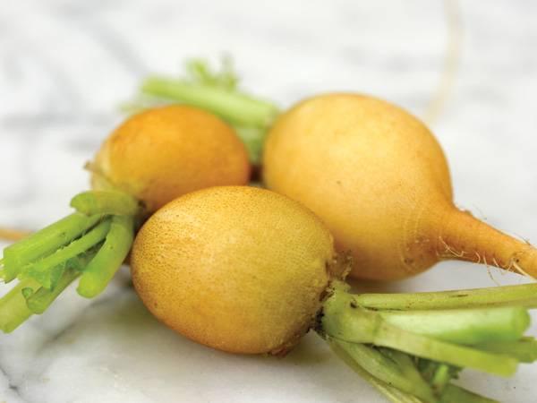 Желтый редис Злата фото