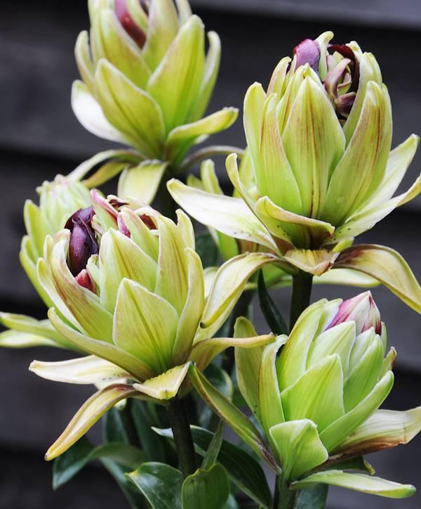 Цветок из полимерной глины своими руками Фото и видео