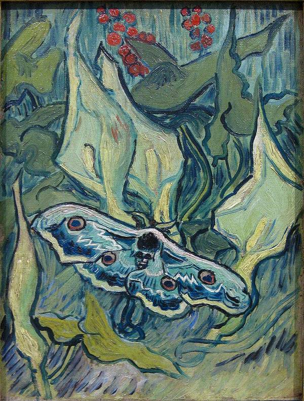 Картина Винсента Ван Гога «Павлиноглазка» фото