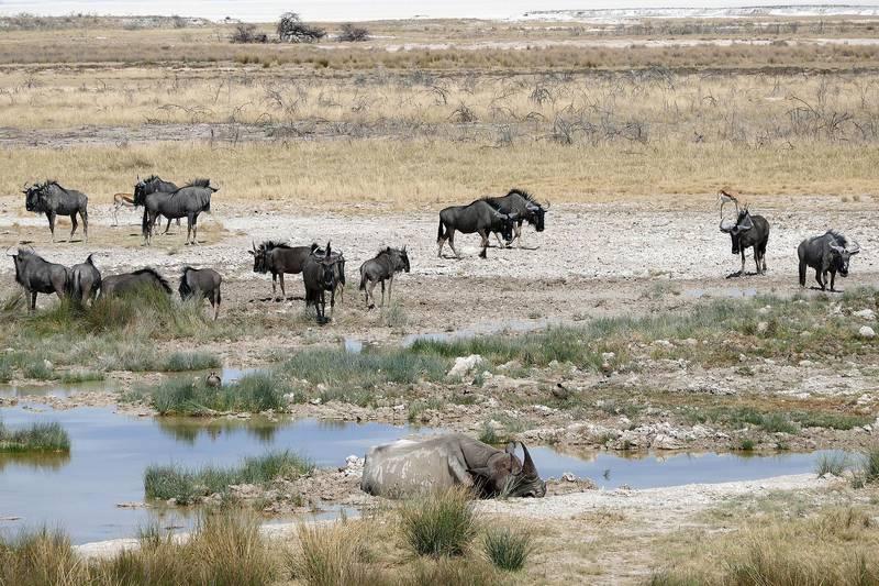 Где живет носорог фото