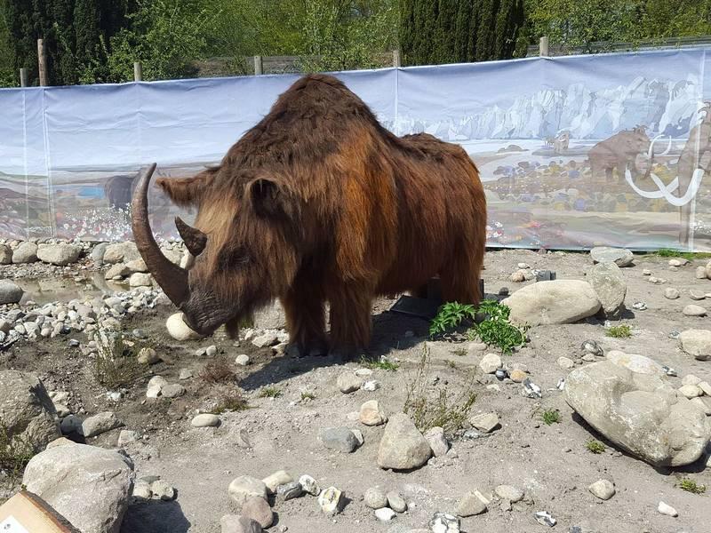 Вымерший шерстистый носорог фото (лат. Coelodonta antiquitatis)