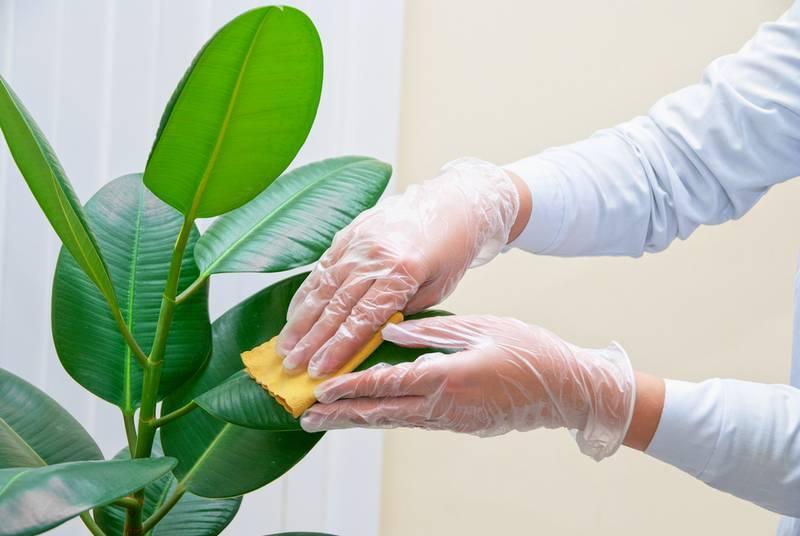 Как бороться с паутинным клещом на растениях фото