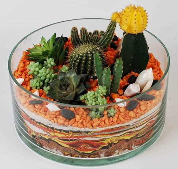 Флорариум из кактусов и суккулентов фото