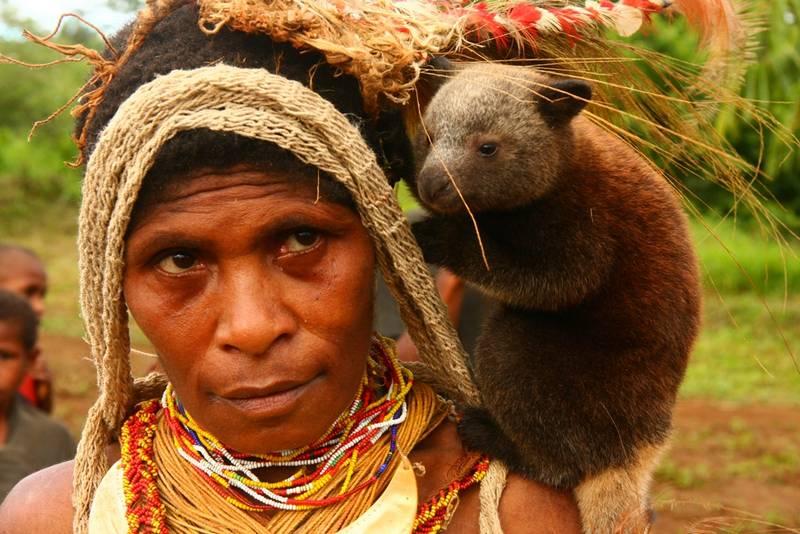 Детеныш древесного кенгуру на плече у женщины фото