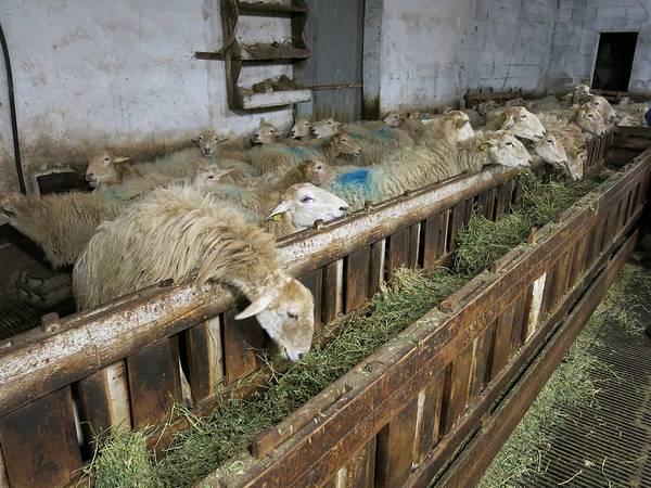 Овчарня (кошара) во Франции фото