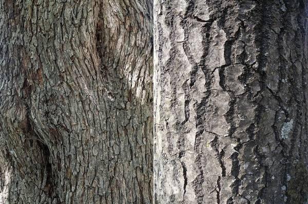 Кора липы сердцевидной и обыкновенной осины фото