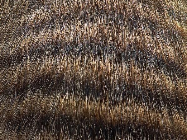 Шерсть полосатого мангуста фото (лат. Mungos mungo)