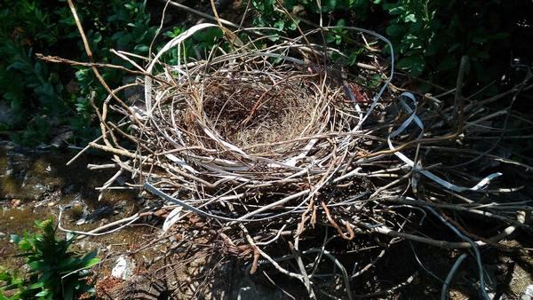 Гнездо ворона фото