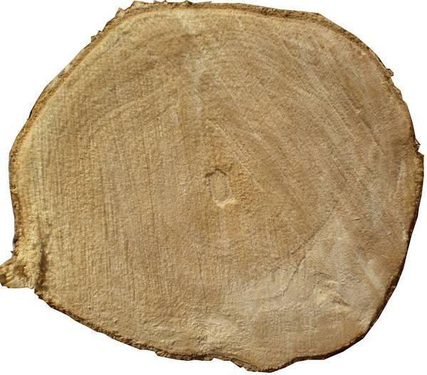 Спил кофейного дерева фото