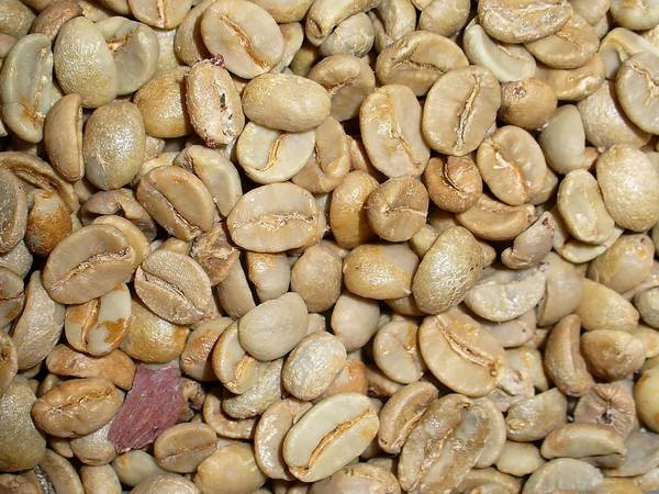 Сырые (необжаренные) кофейные зерна арабики фото (лат. Coffea arabica)