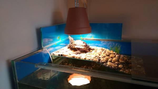 Акватеррариум для красноухой черепахи фото (лат. Trachemys scripta elegans)