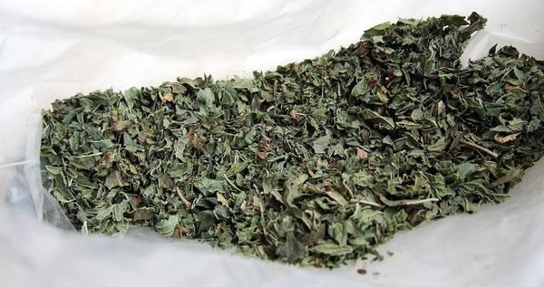 Сушеные листья мяты фото (Mentha sp.)