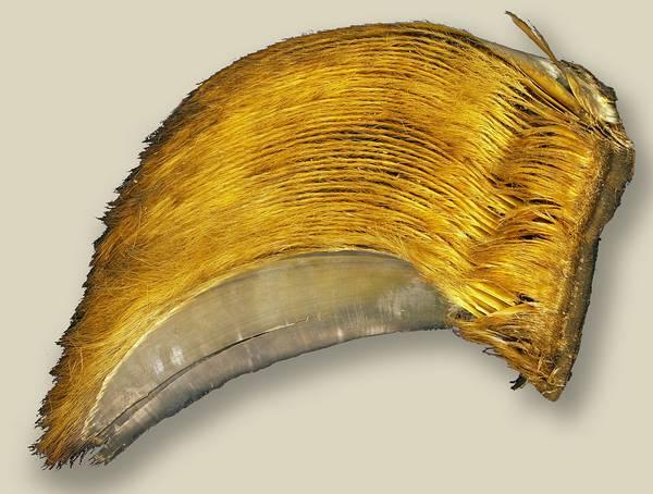 Китовый ус синего кита фото (Balaenoptera musculus)