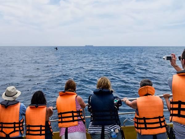 Наблюдение за китами у берегов Шри-Ланки фото (Balaenoptera musculus)